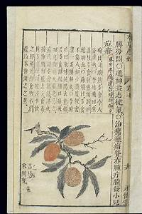 Chinese herbs antiviral seattle